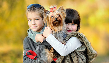 Pet relocations made easy